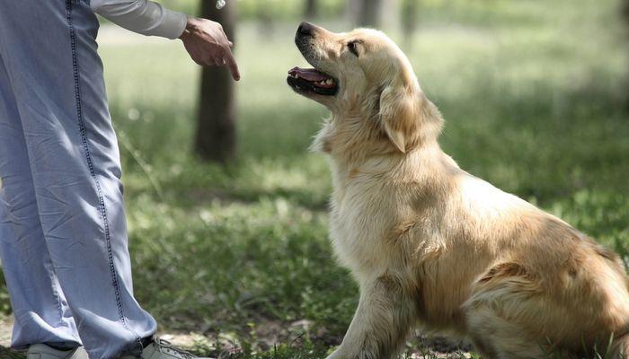 Comment former un chien Commandes de base