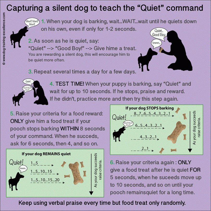 Comment former un chien à ne pas aboyer: top des méthodes qui vont travailler
