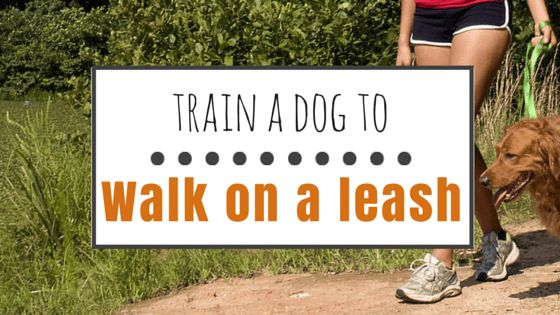 Comment former un chien à marcher en laisse