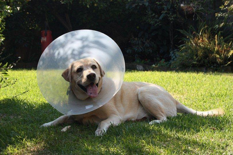 Comment traiter les allergies de chien efficacement