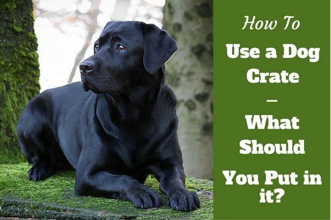 Comment utiliser une caisse de chien - quand et quand ne pas caisse de votre chien