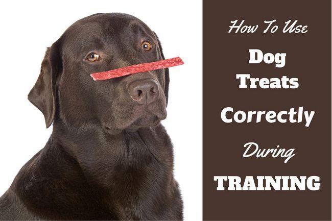 Comment utiliser chien traite correctement dans la formation de chien