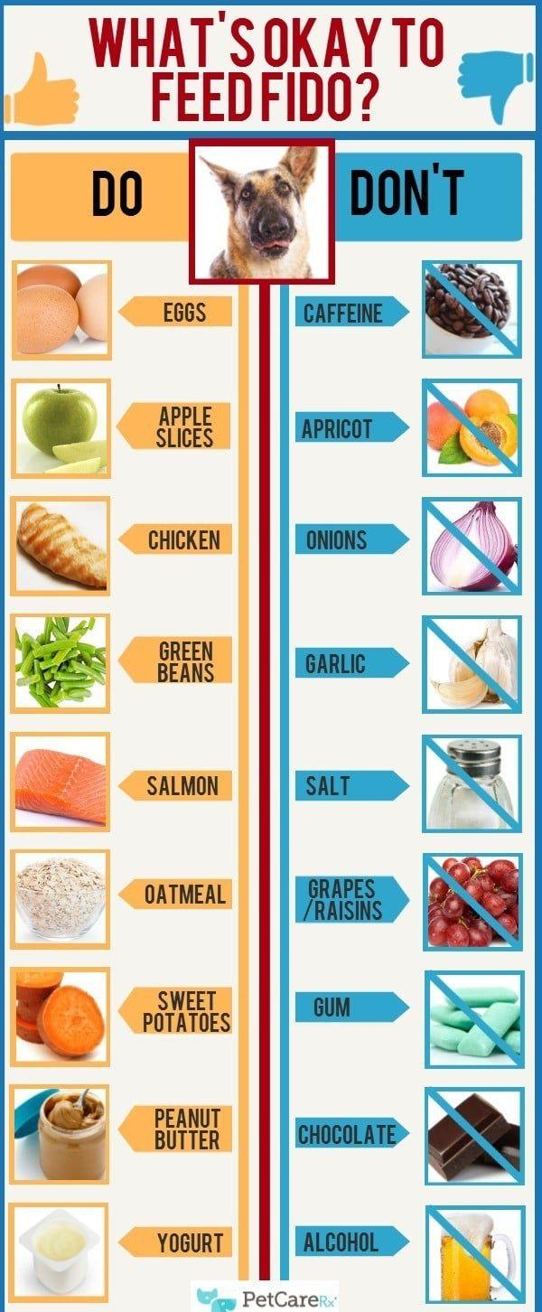 Nourriture pour chiens infographique