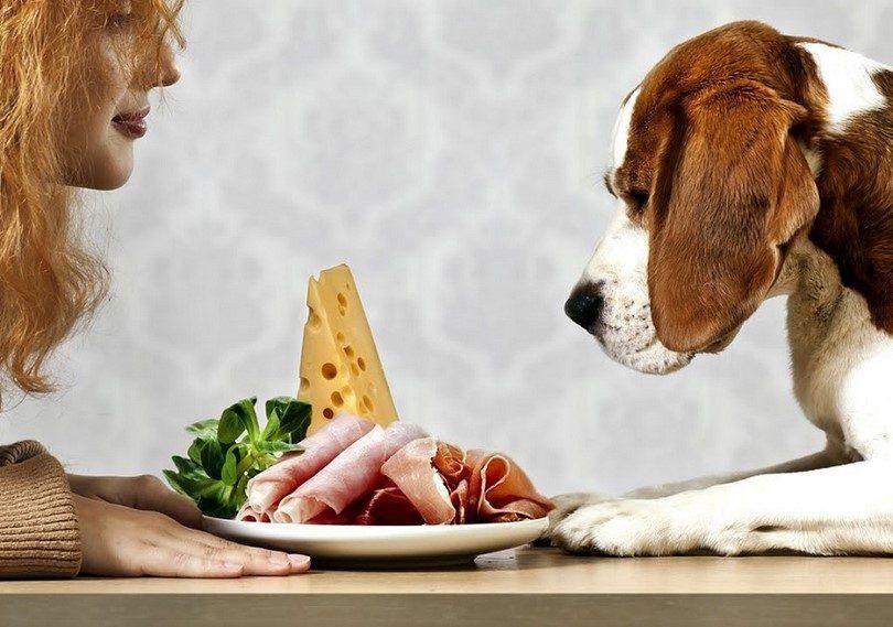 Dog veut l`alimentation humaine
