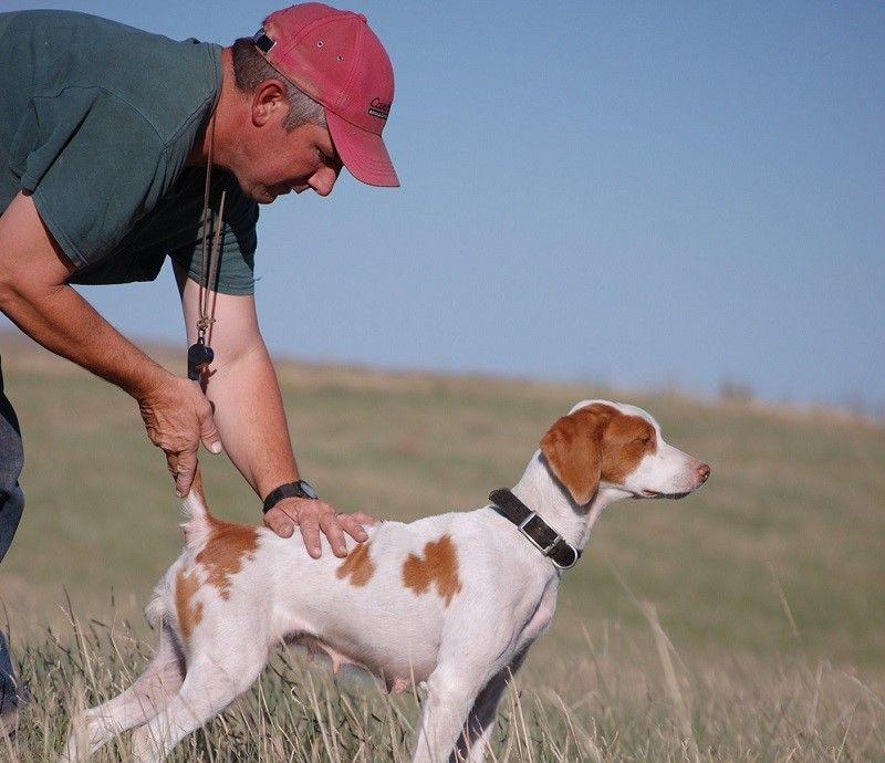 La formation d`un chien pour la chasse