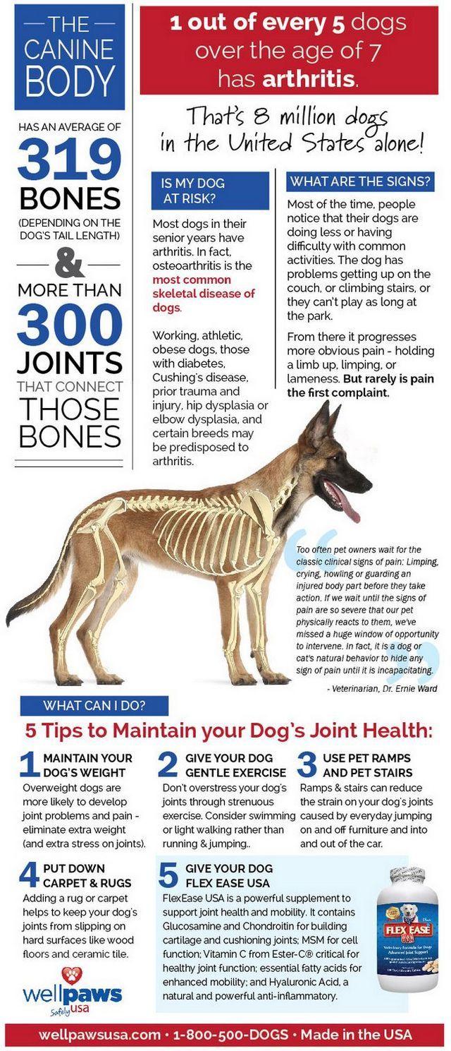 Infographic: prendre soin des articulations de votre chien