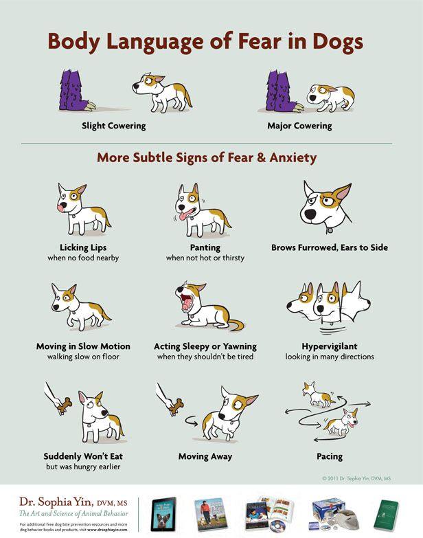 Infographie: le langage du corps de la peur chez les chiens