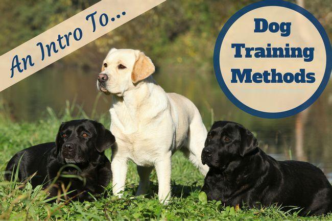 Dog méthodes de formation: Un laboratoire jaune et 2 noirs dans l`herbe par l`eau