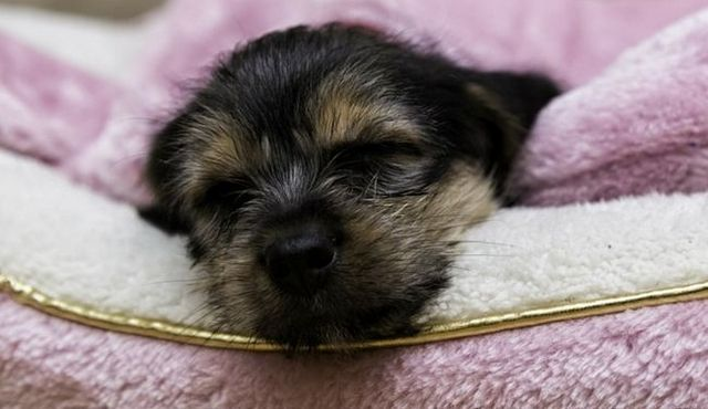 Est-ce une nuit chiot lumière une aide efficace du sommeil?