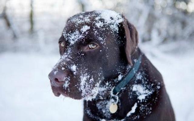 Est-il trop froid pour laisser votre chien dehors