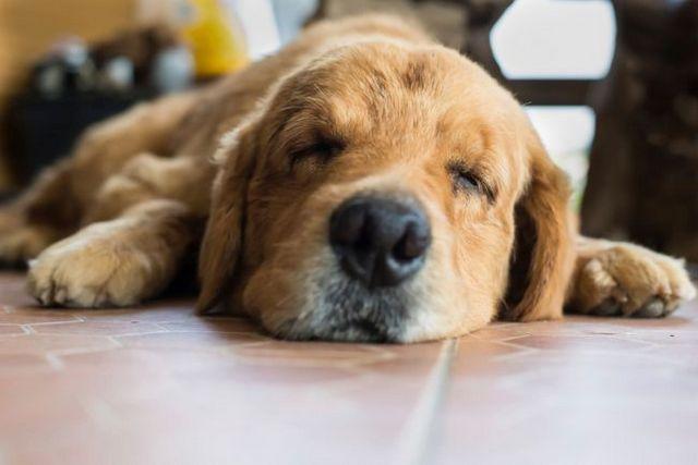 Est-ce que mon chien d`avoir une saisie?