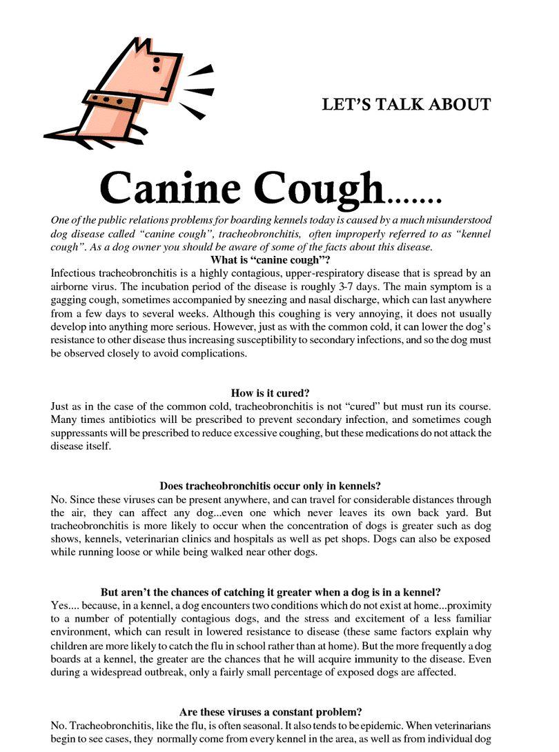 La toux de chenil chez les chiens: Symptômes, causes et traitement