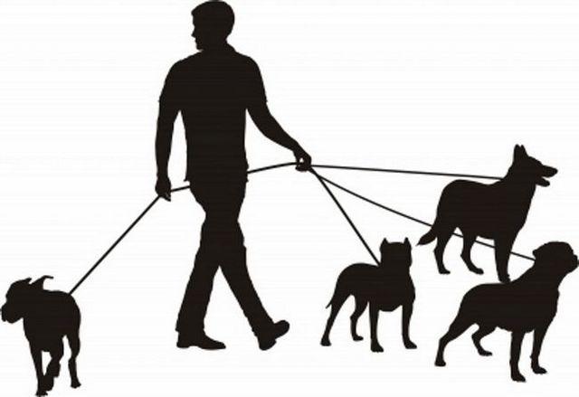 dressage de chiens en laisse