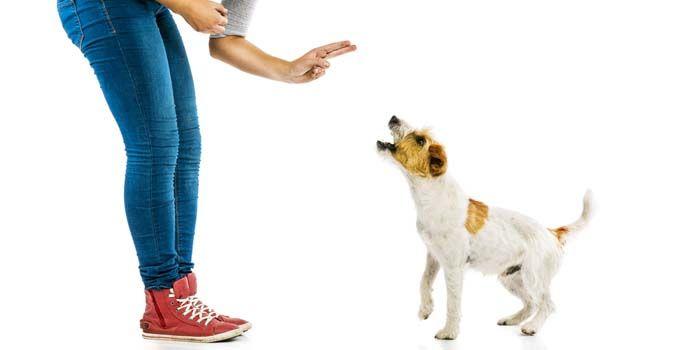 Confusion À propos de Renfort négatif Pendant la formation de chien