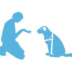 Types de brosses de toilettage de chiens et leurs utilisations
