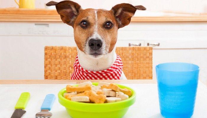 aliments pour chiens faits maison