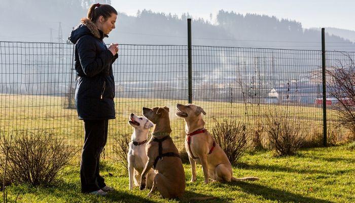 Parlons: bénévolat pour aider les chiens