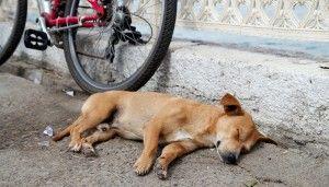 Qu`est-ce que votre chien`s Sleeping Position Says About Him