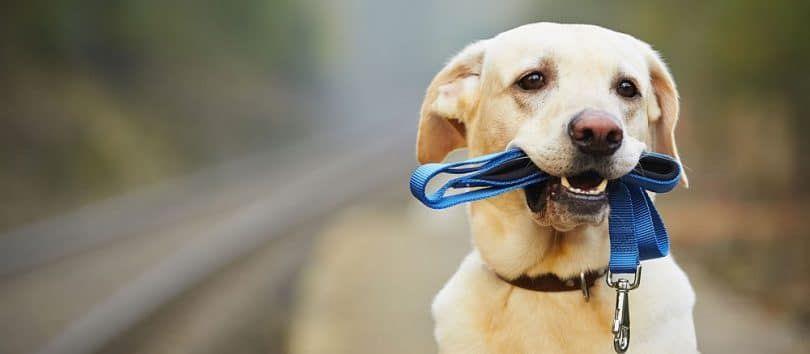 discipline Dog