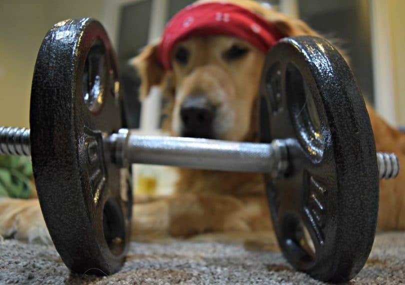 L`alimentation et l`exercice
