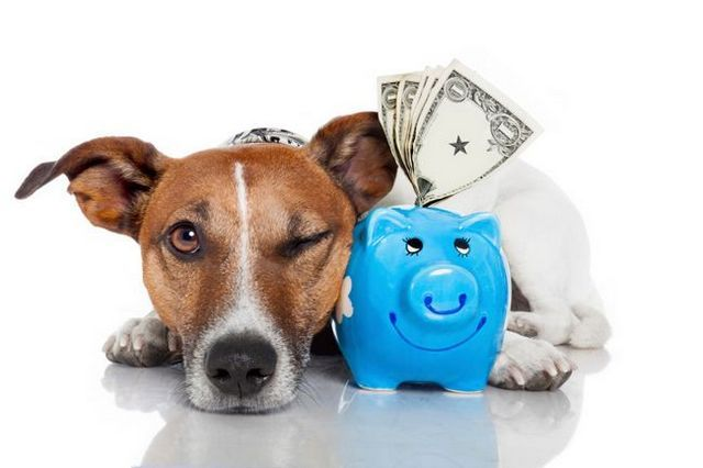La vie avec un chien: des moyens faciles d`économiser sur les factures de vétérinaire