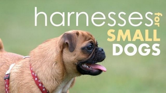 Vous cherchez un harnais de chien pour les petits chiens? Nous avons Gottem ...