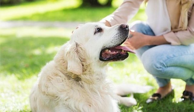 Vous cherchez à acheter un chien? De grandes questions sur les chiens répondus