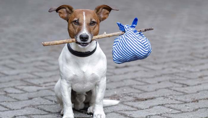 Chien perdu: comment faire face à pire cauchemar de tout propriétaire de chien