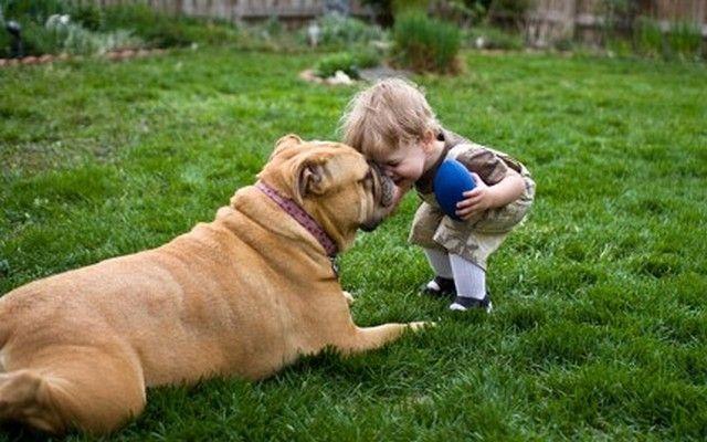 Chien Loyal Accompagne Toddler Ce Égaré