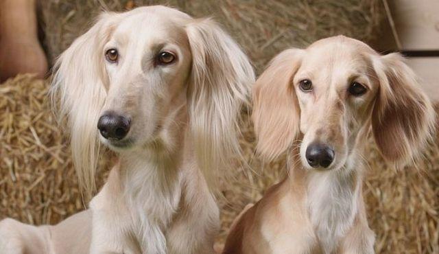 Homme vs chiennes: est-il une différence (en dehors de l`évidence)?