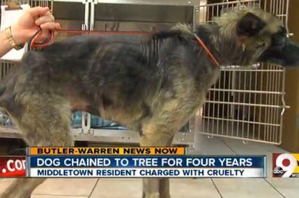 abus de Man chien pendant 4 ans, obtient 25 $ d`amende