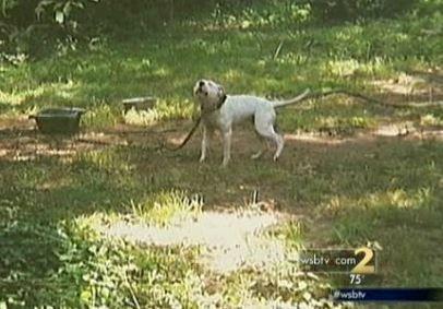 Un homme arrêté après avoir sauvé le chien attaché sur une chaude journée