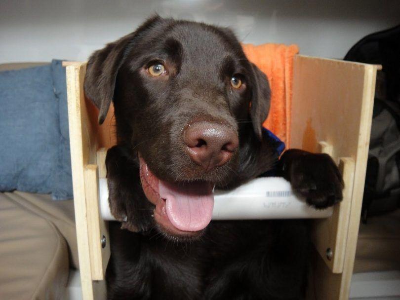 Megaesophagus chez les chiens: les causes, le traitement et les soins