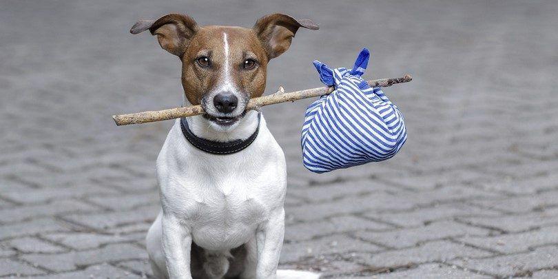 Micropuces et des étiquettes d`identification: ne pas perdre la trace de votre chien