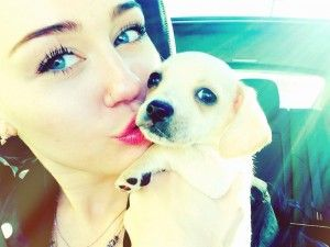 Miley cyrus adopte à nouveau!