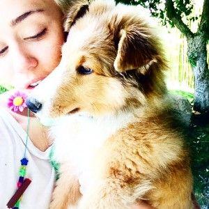 Miley cyrus adopte un autre chiot