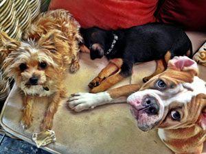 Miley cyrus et son amour pour les chiens