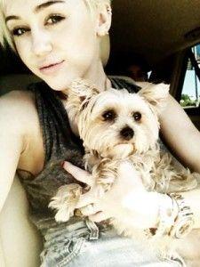 chien de lila de Miley cyrus hospitalisé