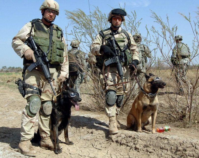 chiens militaires: liste de nos quatre héros pattes