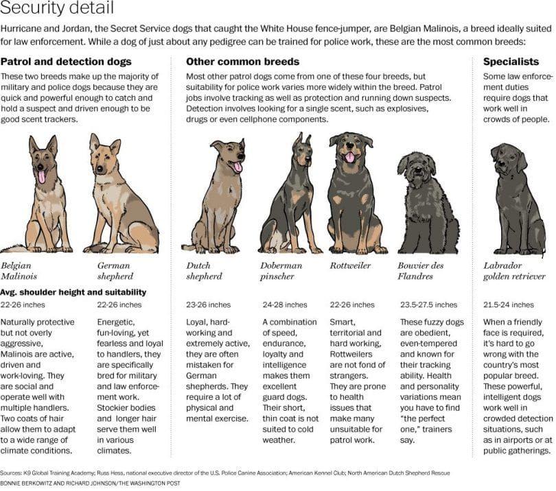 chiens militaires infographique