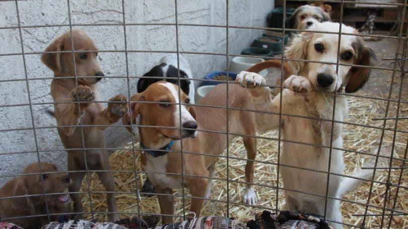 Les chiens à l`abri