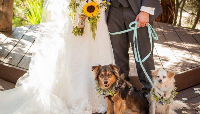 L`argent secret de sauver révélé sur les chiens dans les mariages
