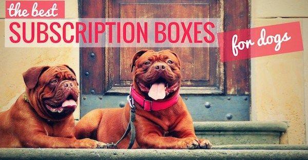 boîtes d`abonnement mensuel pour les chiens: nos 14 premiers choix!