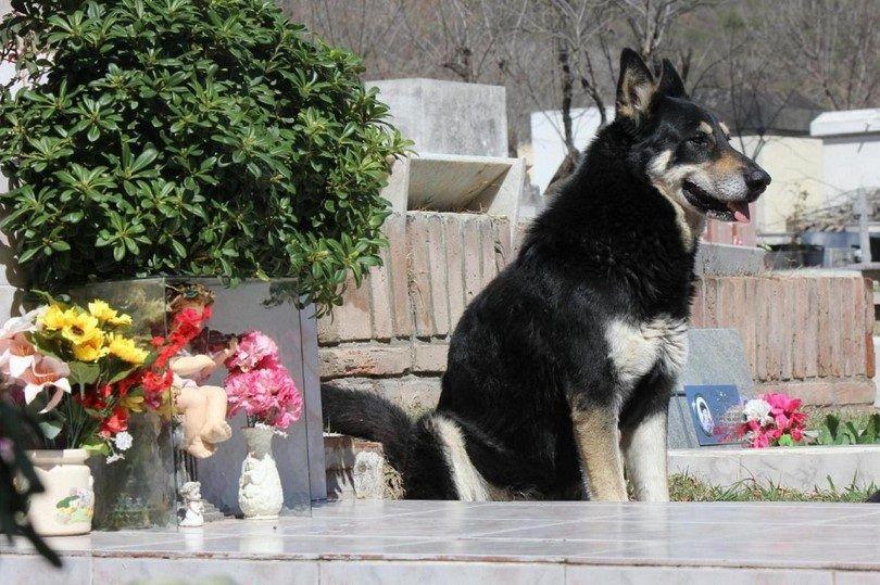 La plupart des races de chiens fidèles: 10 races étonnantes à compter