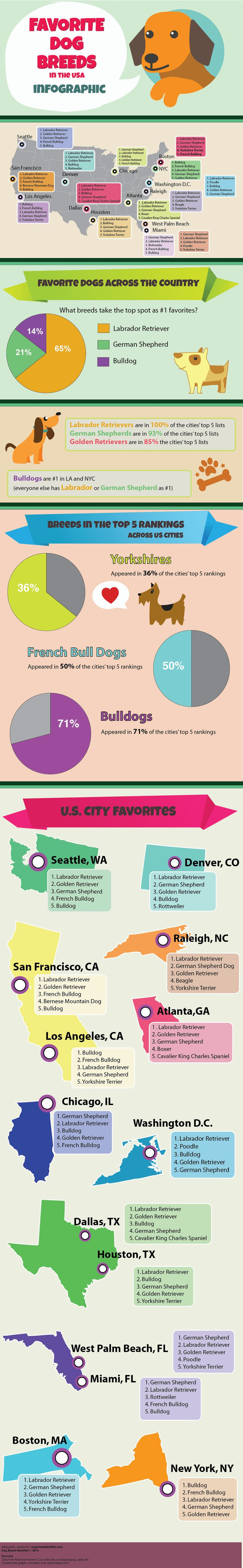 Top Dog Breeds aux Etats-Unis Infographic