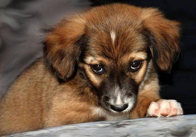 Mon chien a un mauvais gaz: peut-il être arrêté?