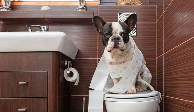 Mon chien poops trop. Est-il trop manger, ou est-il malade?