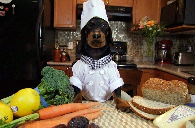 Chef de cuisine Crusoe teckel