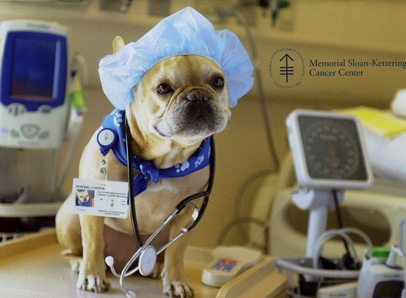 Castrer un chien: éviter le danger de la surpopulation