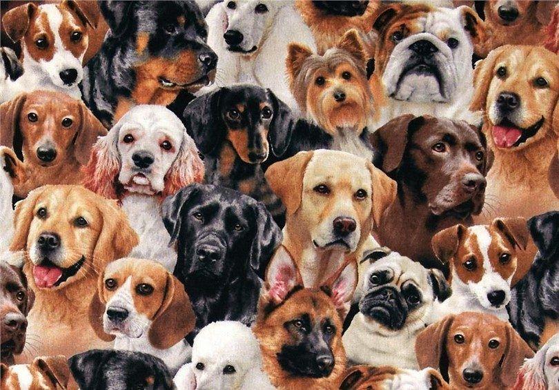 Nouvelles races de chiens: vue d`ensemble des nouveaux ajouts en dernières années